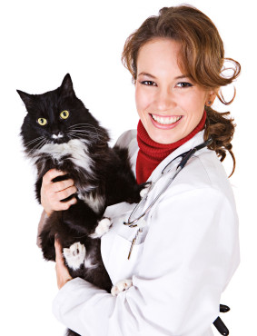 dvm with cat
