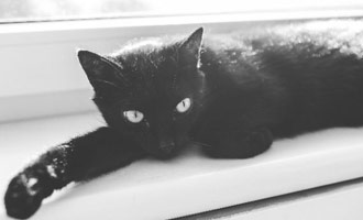 Black pets are much less likely to be adopted