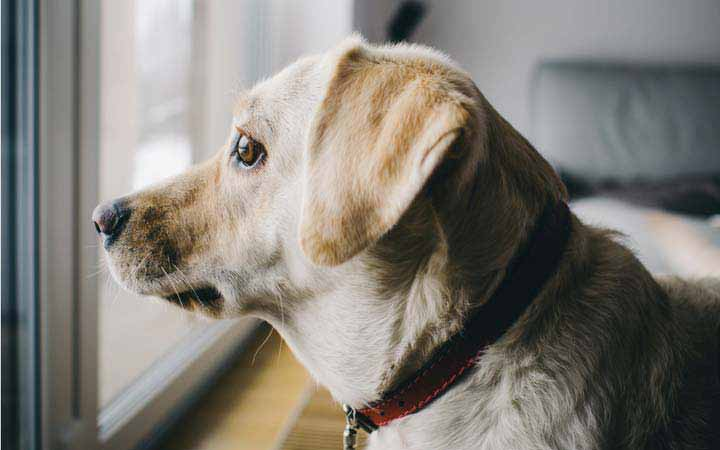 Me and my shadow: how to treat separation anxiety in dogs